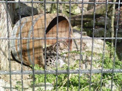 real porno aarhus zoo